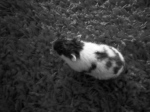 Our pet hamster, Svetje, a gift from Equites